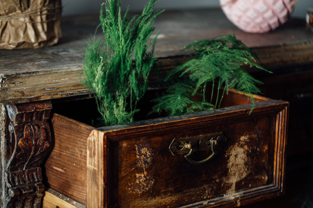 Ferns in open boxes of a vintage chest. old chest of drawers. aged furniture, design.