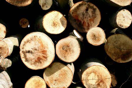 boles: Wood-Macro
