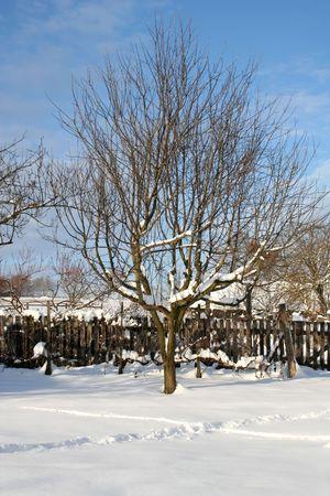 shiver: Wintertime