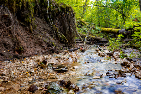 Forest stream and tree roots. Dolginsky ravine, Obninsk, Russia