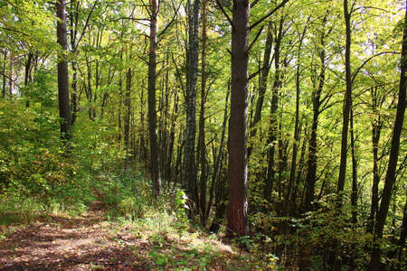 A picturesque slope of a large ravine overgrown with trees in a forest area