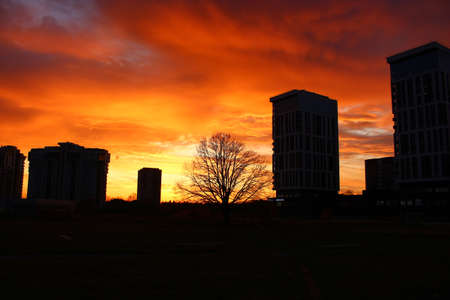 Bright fiery red sunset and silhouettes of a tree and high-rise buildings