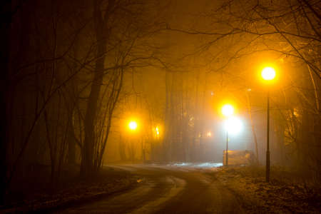 A road in the woodland during a thick fog at night