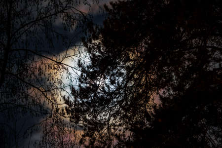 The bright light of the moon in the full moon at night through the clouds and trees in the forest