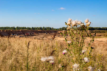 Sand quarry on the background of wild plants. Mining
