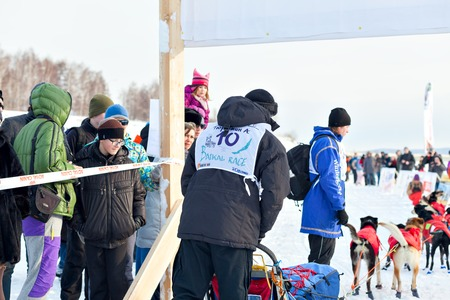 sled dogs: Irkutsk, Russia - March 5, 2016: Baikal Race, sled dog races, contests and speed. Start and finish of the race. dzhoring ski and sledding. Athletes ski and sled dogs Editorial