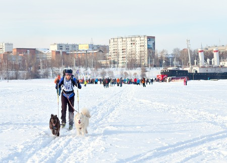 huskys: Irkutsk, Russia - March 5, 2016: Baikal Race, sled dog races, contests and speed. Start and finish of the race. dzhoring ski and sledding. Athletes ski and sled dogs Editorial