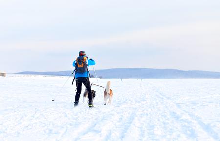 huskys: Irkutsk, Russia - March 5, 2016: Baikal Race, sled dog races, contests and speed. Start and finish of the race. dzhoring ski and sledding. Athletes ski and sled Dogs