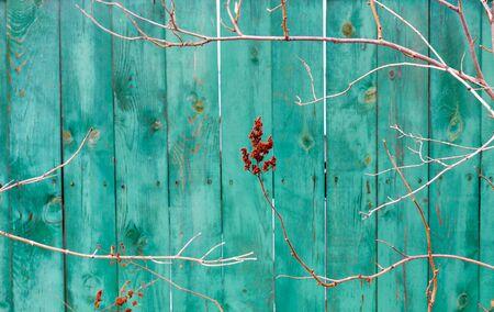 テクスチャや背景として木板グリーン。ターコイズ グリーンのフェンスのフラグメントの背景の木の枝。木の枝の自然なフレームです。領域をコピーします。