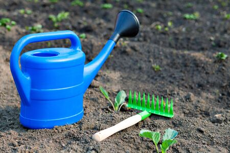 Blue plastic watering can and small rake on the background of the garden and the beds. summer in the garden outdoors. Bright equipment care crop Stock Photo