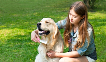 pure breed: The content of Labrador. A young girl cares for dog fur outdoors. Hygienic procedures. The owner of a pure breed dog fur golden retriever. Human friendship and dogs.