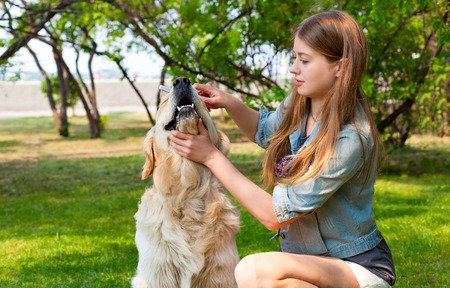 pure breed: Human friendship and dogs. Hygienic procedures. The content of Labrador. A young girl cares for dog fur outdoors. The owner of a pure breed dog fur golden retriever.