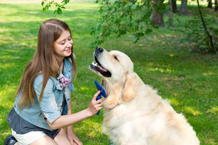 De inhoud van Labrador. Een jong meisje zorgt voor hondenbont buitenshuis. Het plezier en de vreugde van hygiëne. De eigenaar van een reuzegrote hondenbont golden retriever.