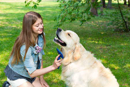 The content of Labrador. A young girl cares for dog fur outdoors. The pleasure and the joy of hygiene. The owner of a pure breed dog fur golden retriever.