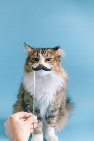 Cat and fancy dress retro mustache. A cute cat is sitting on a blue background in a mask with a mustache. Cute portrait