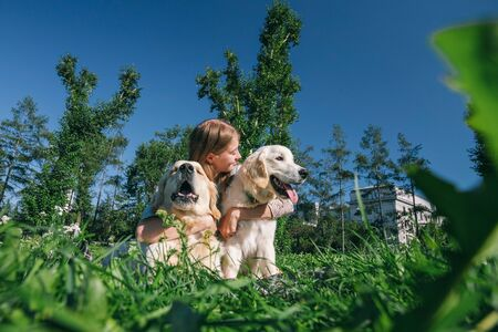 Girl with two golden retriever dogs in a park Standard-Bild - 132304452