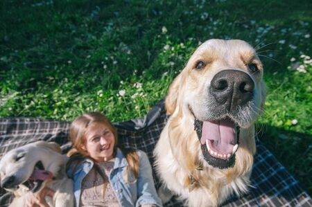 selective focus beautiful girl hugs two golden retriever and smiling sitting on a meadow Standard-Bild - 132304468