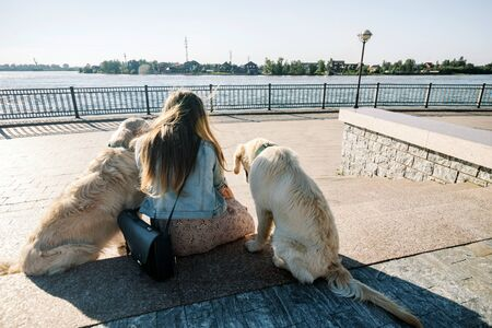 Rear view of a beautiful girl and her dogs on a morning walk with two golden retrievers. Standard-Bild - 132304493