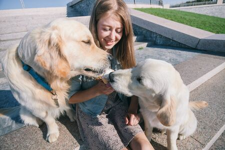 A young girl feeds her dogs ice cream in a park on a hot summer day. Standard-Bild - 132304525