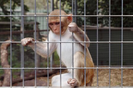 trapped: Monkey behind bars