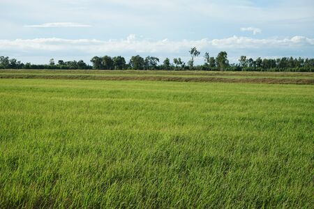 Rice fields and beautiful skies in Thailand Banque d'images - 132233960