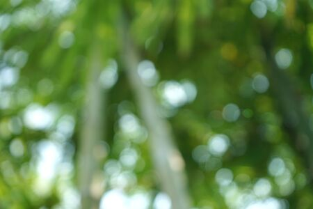 Bamboo forest in the tropics in Thailand (blurred image) Banque d'images - 133691490