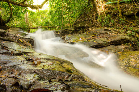 wil: Water fall in dense and impenetrable forest