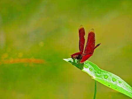 A dragonfly stand on a leaf photo