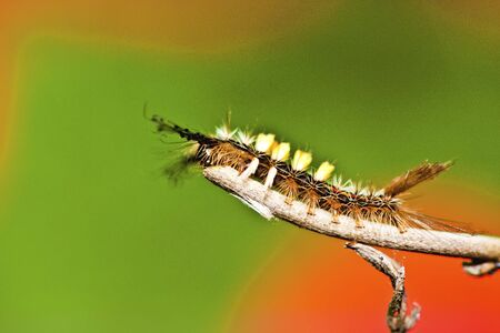 a larva crawling on a branch photo
