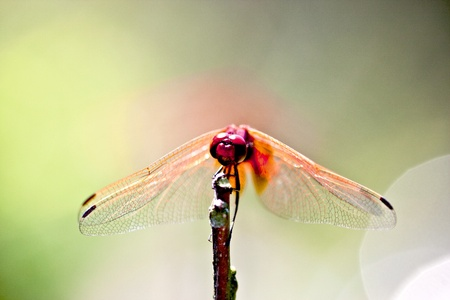 a dragonfly stay on a wood branch photo