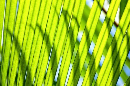 shadows on green leaves photo