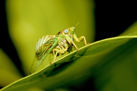 noise isolation: a cicadas stay on plant