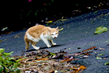 looking around: a cat looking around on ground