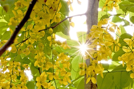 yellow flowers with sunshine in summer photo