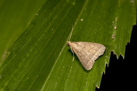 a moth stay on plant at night photo