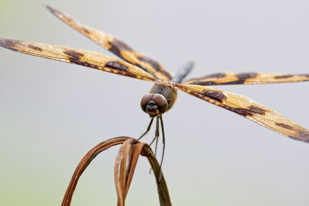 a dragonfly stay on branch in summer photo