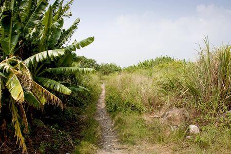 brushwood: Path leading through summer brushwood on a sunny day.