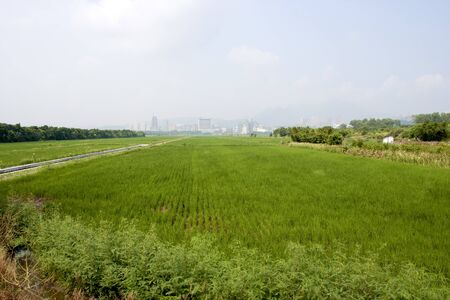 a broad view of rice farm in taipei Stock Photo - 10488503