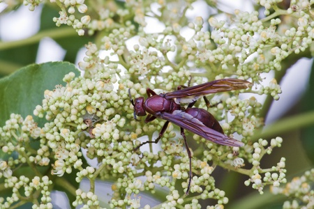 colorful wasp attract the honey over flora photo