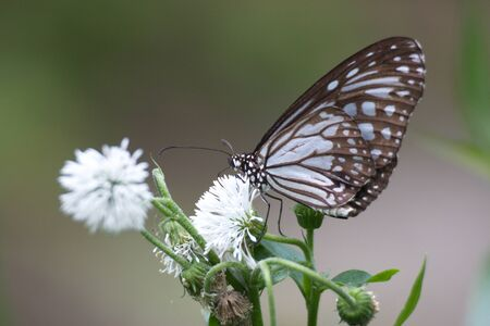Closeup Butterfly on Flower photo
