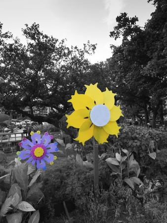 focus on Colorful pinwheel in black and white image Stock Photo - 11367881