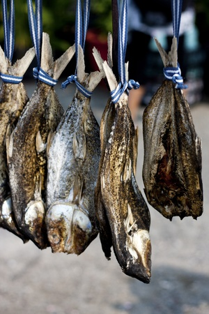 dried salted milk- fish preserved through salting Stock Photo - 11390855