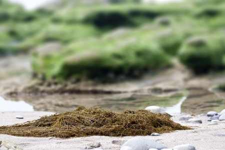 funny view of seaweed in spring Stock Photo - 13054922