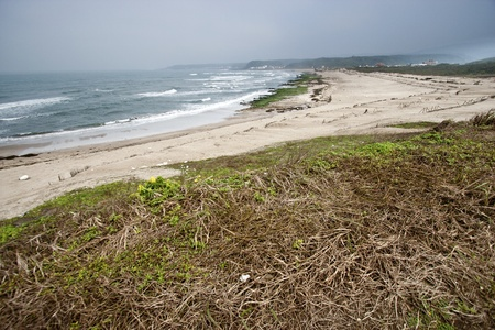 Beautiful white sand beach with plants in Taiwan photo