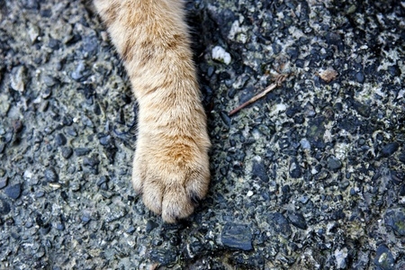 foreleg: macro view of cats leg Stock Photo