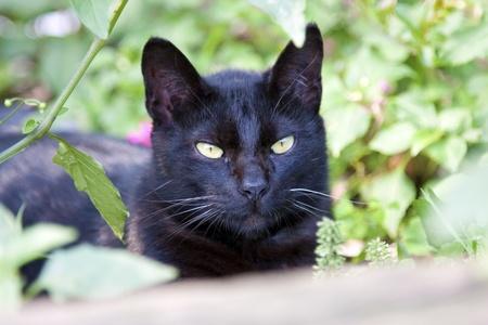 amarillo y negro: retrato de un gato negro lindo mirando hacia el futuro