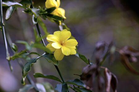 beautiful yellow flora in natural habitat photo