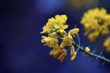 beautiful view of a group yellow flowers in spring photo