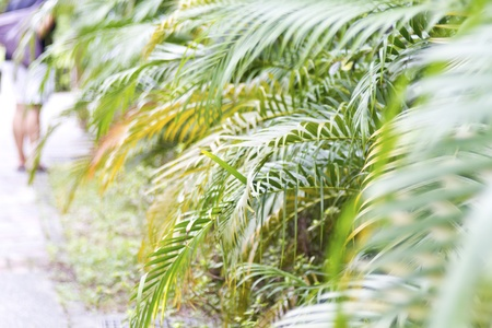 series of texture  of green palm leaves Stock Photo - 15320435