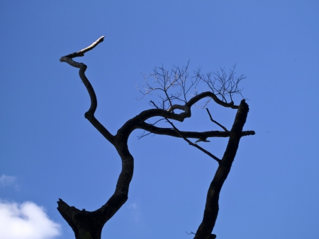 silhoutted: silhoutted tree against blue cloudy sky